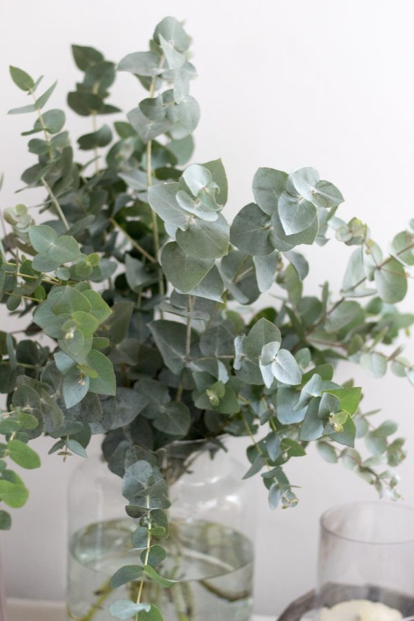 Eucalyptus in a vase, perfect foliage for the home