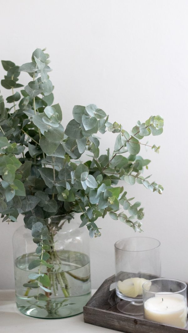 Eucalyptus Bunch, placed in a vase